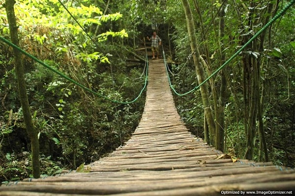 Hanging Bridge Jungle